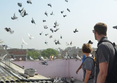 Pigeon game at Old Delhi during the Masterji kee Haveli Tour