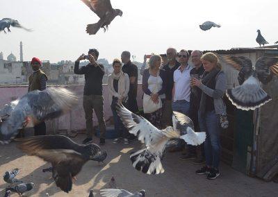 Pigeon game (Kabootar baazi) at Old Delhi