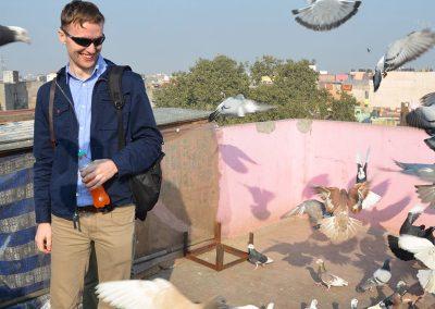 Homing Pigeon at Old Delhi